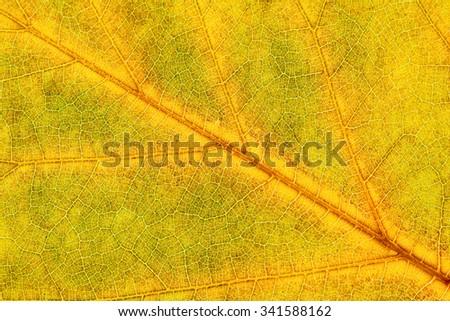 Extreme Closeup of Autumn Leaf  - stock photo
