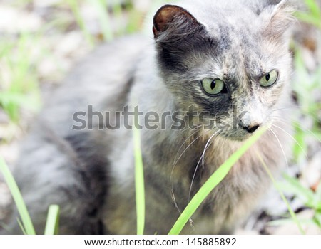 Extreme closeup of grey cat sitting in grass - stock photo