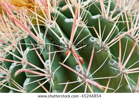 Extreme horizontal close-up of green cactus with pink thorns - stock photo