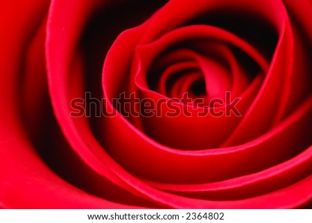 Extreme macro of bright red rose petals