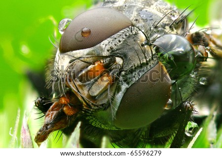 Extreme macro photo a fly - stock photo