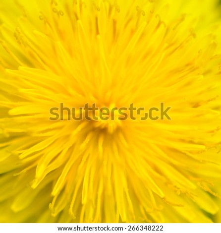 Extreme macro shot of dandelion pollen - stock photo