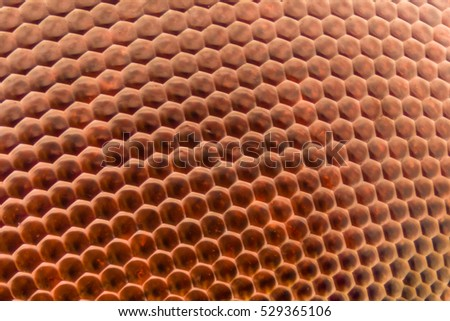 Extreme magnification - Dragonfly compound eye texture at 20x