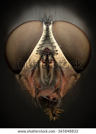 Extreme magnification - Fly head, front view - stock photo