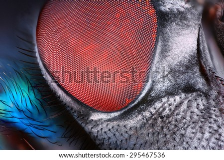 Extreme sharp and detailed fly compound eye surface taken at extreme magnification with Mitutoyo microscope objective. - stock photo