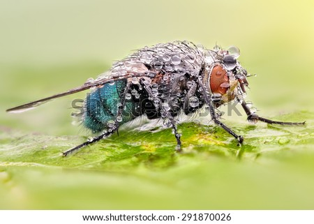 Extreme sharp and detailed macro portrait of fly with dew - stock photo
