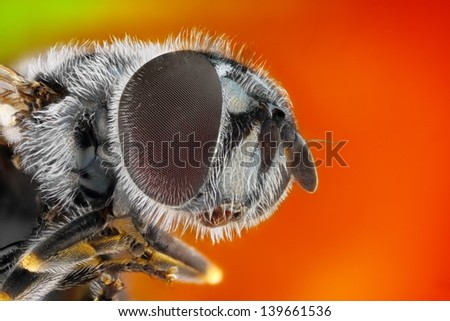 Extreme sharp and detailed study of fly taken with microscope objective stacked from many shots into one photo