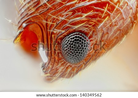 Extreme sharp and detailed study of Myrmica ant eye taken with 25x microscope objective stacked from many shots into one very sharp photo - stock photo