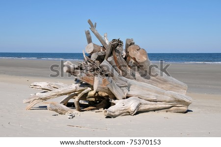 Extremely large piece of driftwood on the beach at Cumberland Island, Georgia - stock photo