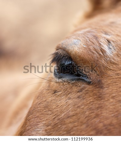 eye horse - stock photo
