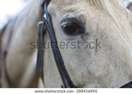 Eye of a horse close up background