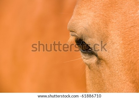 Eye of the bay horse. Brown background. - stock photo