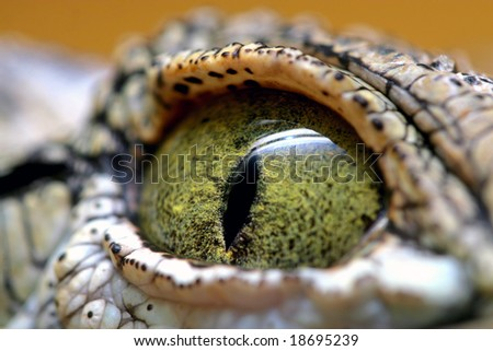 eye of the crocodile - stock photo