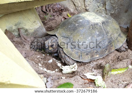eye of turtle (selected focus) with its whole body on soil ground - stock photo