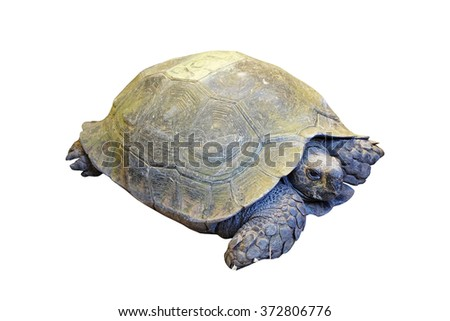 eye of turtle (selected focus) with its whole body on soil ground)Isolated mode and have clipping path) - stock photo