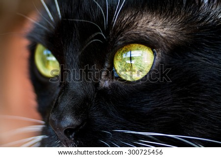 Eyes of a black cat closeup. - stock photo