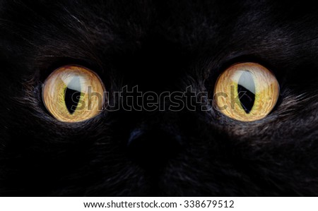 Eyes of a black cat macro