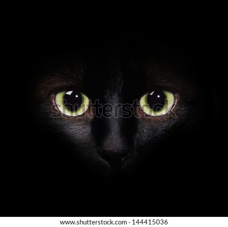 Eyes of the cat in the darkness - stock photo