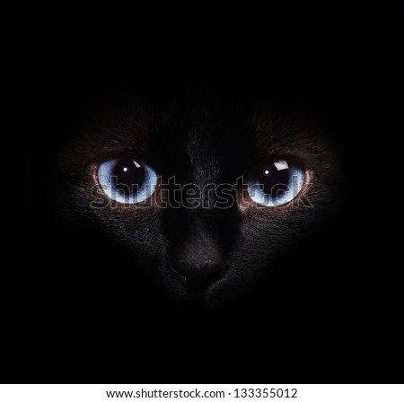 Eyes of the siamese cat in the darkness - stock photo