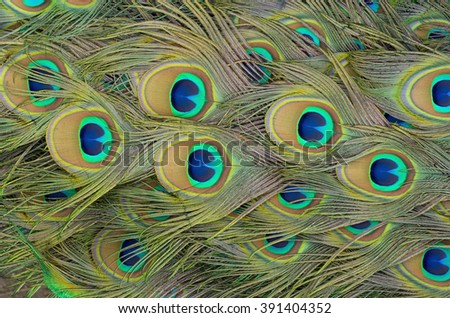 Eyespots on a peacock's train feathers illuminated by sunlight. - stock photo
