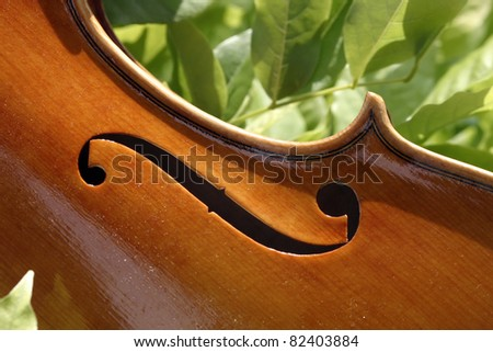 F-hole detail of a beautiful Cremonese violin, during its varnishing. Shot taken in the nature. - stock photo