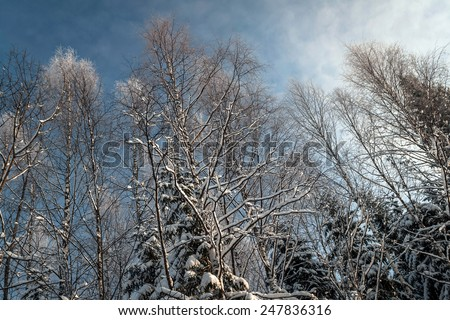 Fabulous snowy winter forest, trees under snow against the bright blue sky in northern Russia - stock photo