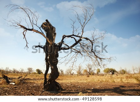 Fabulous view of the single dead burnt tree in arid place - stock photo