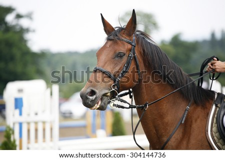 Face of a beautiful purebred racehorse on the jumping competition