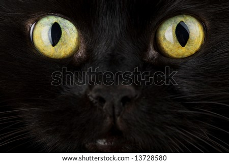 face of black cat closeup