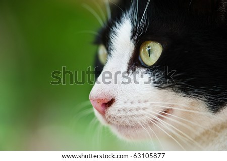 Face of cat - stock photo