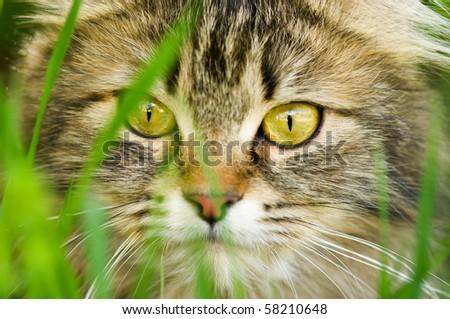 Face of cat closeup - stock photo