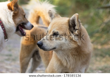 Flossy Dog Name