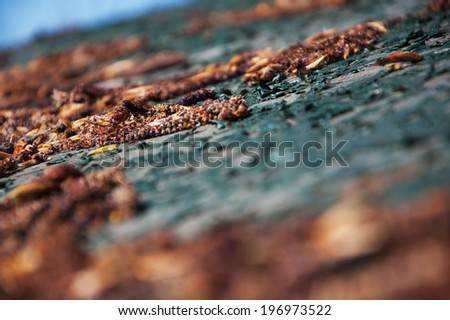 Faded flowers and leaves on the grungy green metal surface with peeling paint. Selective focus and shallow depth of field. Decay background. - stock photo