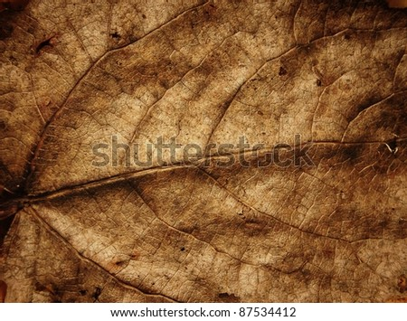 faded leaf veins floral background - stock photo