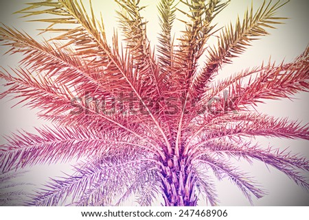 Faded vintage retro filtered palm background. - stock photo