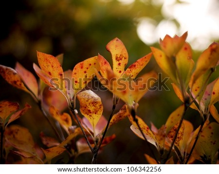 Fading Autumn Leaves - stock photo