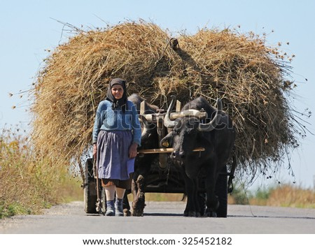 FAGARAS, ROMANIA - SEPTEMBER 2013: Old peasant woman carries the hay in oxcart - stock photo