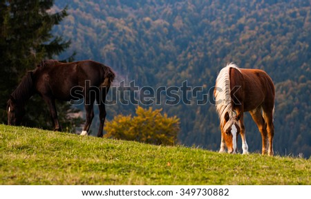 Fairy mountain landscape . Horse eating grass on mountain hill . Warm autumn evening in mountains .  - stock photo