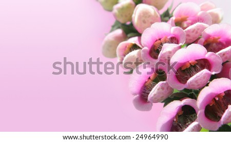 Fairy's delight - foxglove flowers in a pink sky - stock photo