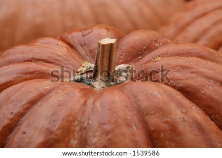 Fairy tale pumpkin...grown to be darker and rustic - stock photo