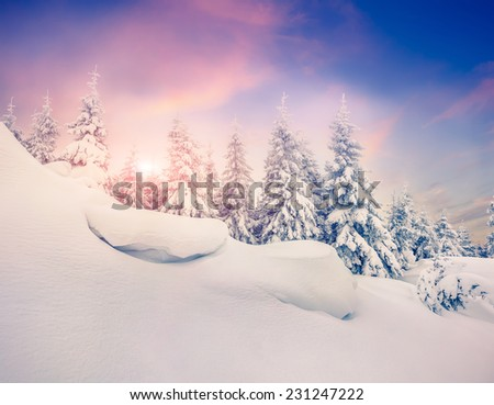 Fairy-tales snowfall in winter forest. Colorful winter sunrise. - stock photo