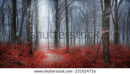 Fairytale autumn forest in fog with red leaves and frost in trees - stock photo