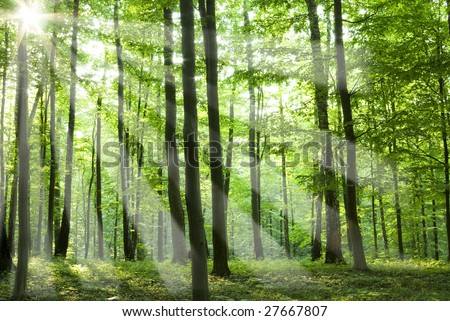 Fairytale forest sunlight and shadows - stock photo