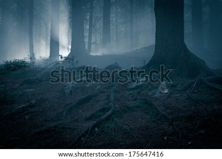 Fairytale landscape. Mystery forrest. - stock photo