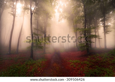 Fairytale path in foggy forest - stock photo