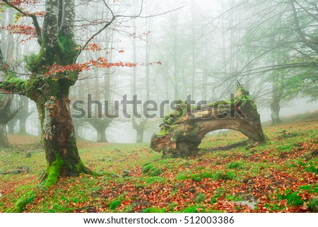 fairytale woods at gorbea natural park, biscay
