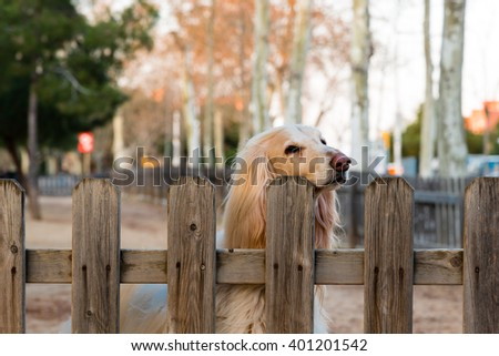 faithful blonde dog awaiting its owners return - stock photo