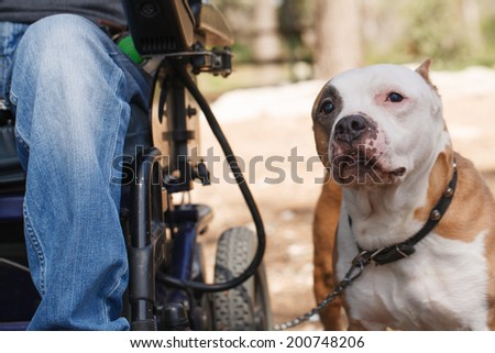 Faithful dog with its owner in a wheelchair - stock photo