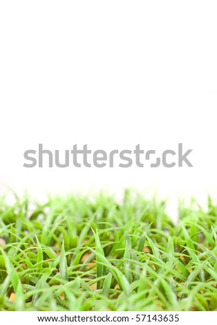 Fake Large Bladed Grass with Custom Space - stock photo
