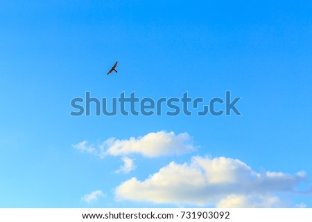 Falcon at the blue sky with light clouds